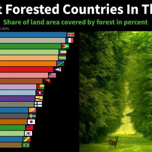The Most Forested Countries In The World From 1950 to 2020